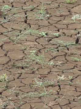 Vigilance sécheresse : économisez l'eau !